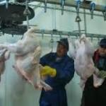 Из Казахстана в Россию отгружено мясо индейки