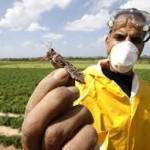 В ЗКО на борьбу с саранчой предусмотрено в два раза больше средств