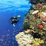 Туроператор не должны направлять туристов на Синайский полуостров
