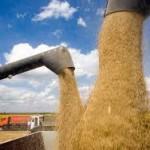 Казахстан намерен экспортировать зерно