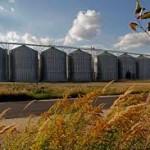 Ожидается стабилизация цен на хлеб и муку в Казахстане