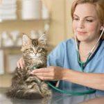В доме появилась кошка – что нужно знать неопытному хозяину