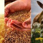 Поддержка сельского хозяйства в Республике Казахстан